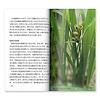 カラー版  里山を歩こう:稲に上がってきたアマガエル
