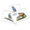子どもと一緒に覚えたい 野鳥の名前:今ならカード1枚プレゼント