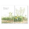野の草花: