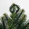 壁掛式クリスマスツリー: