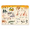 オストハイマーカタログ:動物